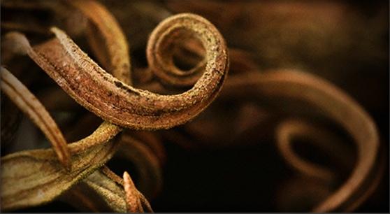Entangled Species